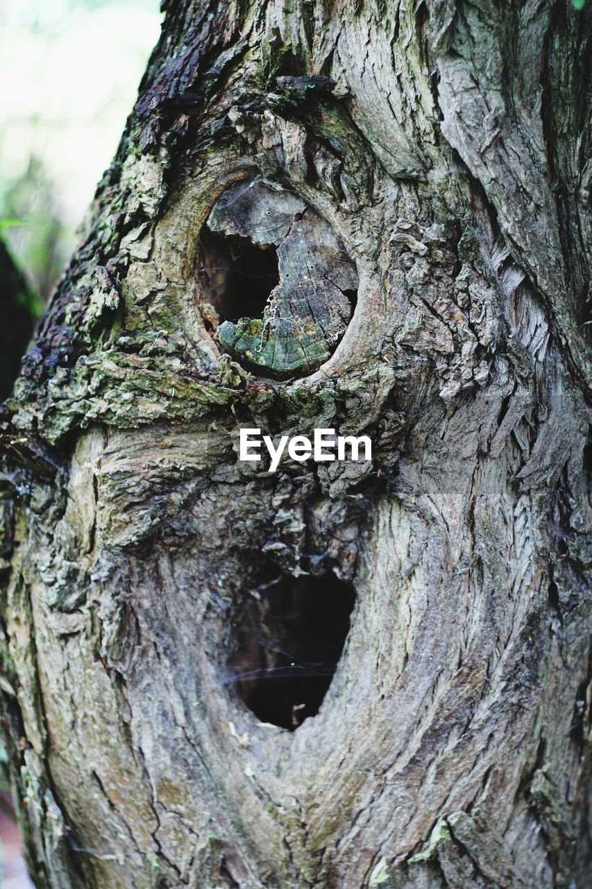 tree trunk, trunk, tree, textured, plant, hole, no people, close-up, day, rough, focus on foreground, bark, nature, plant bark, pattern, growth, natural pattern, outdoors, wood - material, weathered, carving