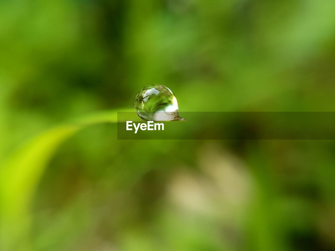 nature, fragility, no people, plant, growth, close-up, outdoors, day, drop, focus on foreground, beauty in nature, green color, leaf, water, freshness, animal themes