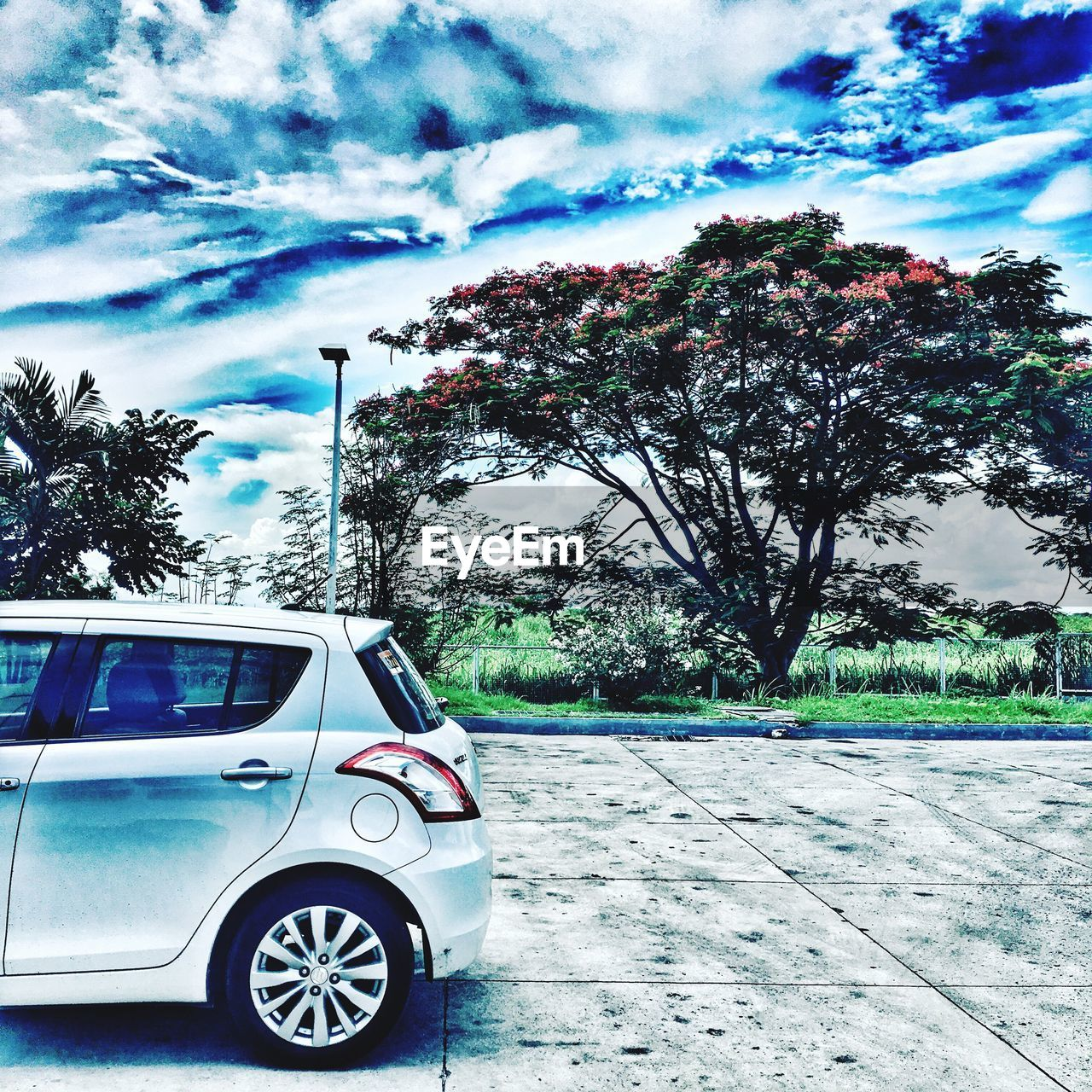 tree, car, transportation, cloud - sky, sky, land vehicle, mode of transport, day, no people, outdoors, road, nature