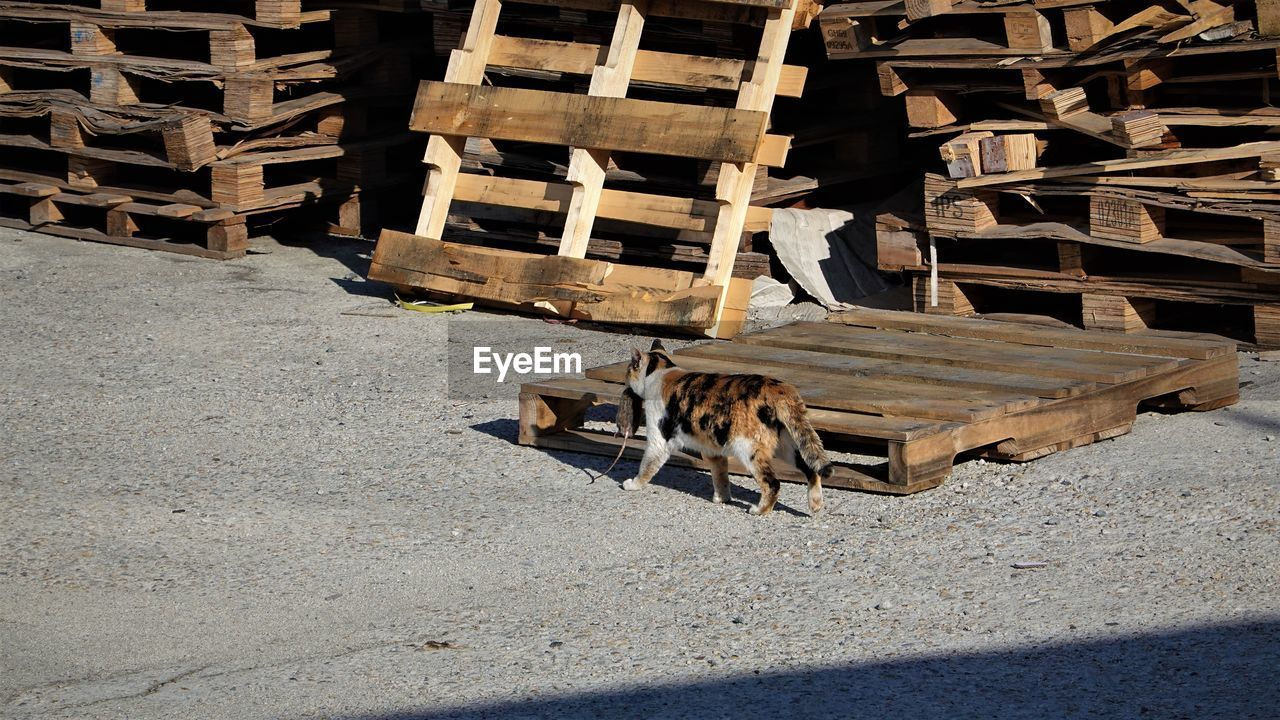 HIGH ANGLE VIEW OF HORSE CART ON LOGS