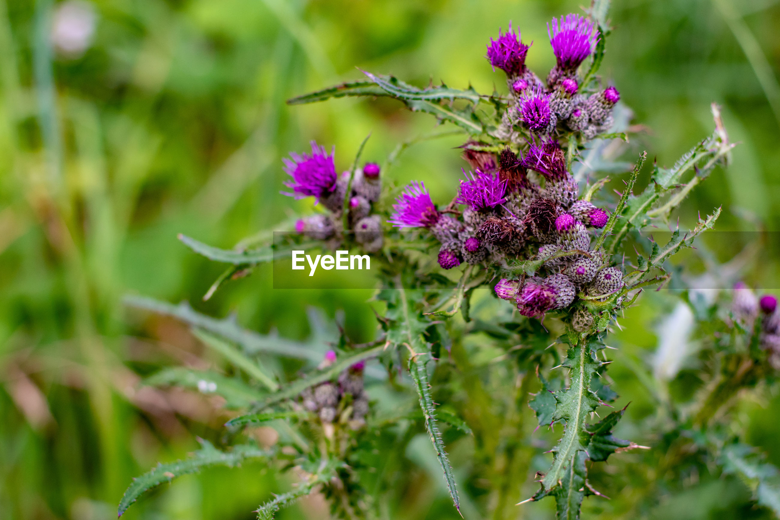 CLOSE-UP OF PURPLE FLOWERING PLANT OUTDOORS