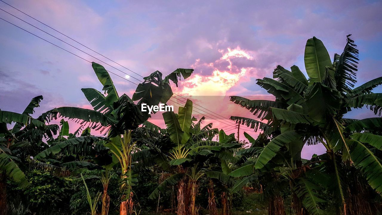 sky, cloud - sky, banana tree, growth, low angle view, palm tree, no people, outdoors, nature, leaf, beauty in nature, day, tree, architecture