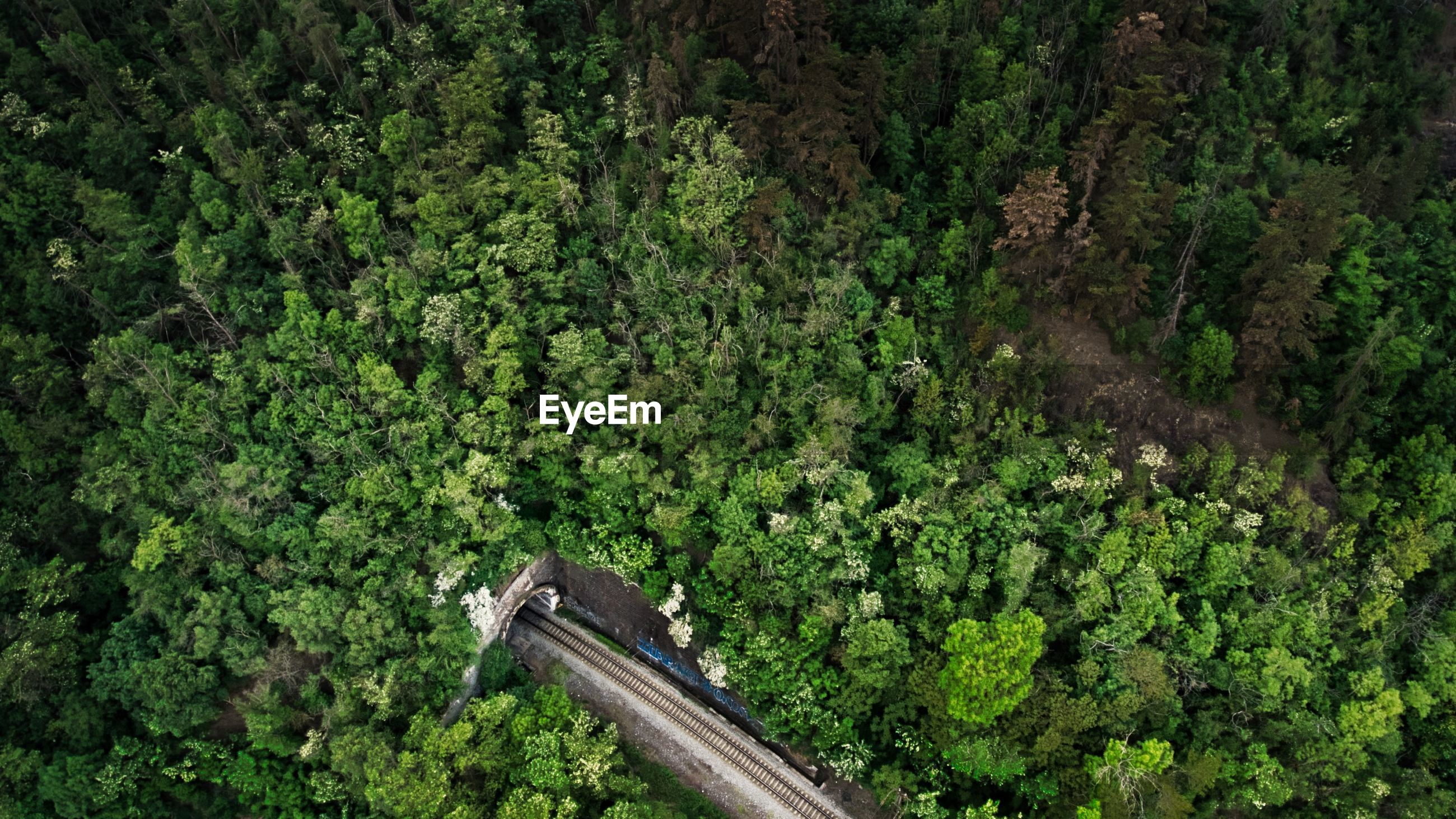 Aerial view of railroad track amidst trees