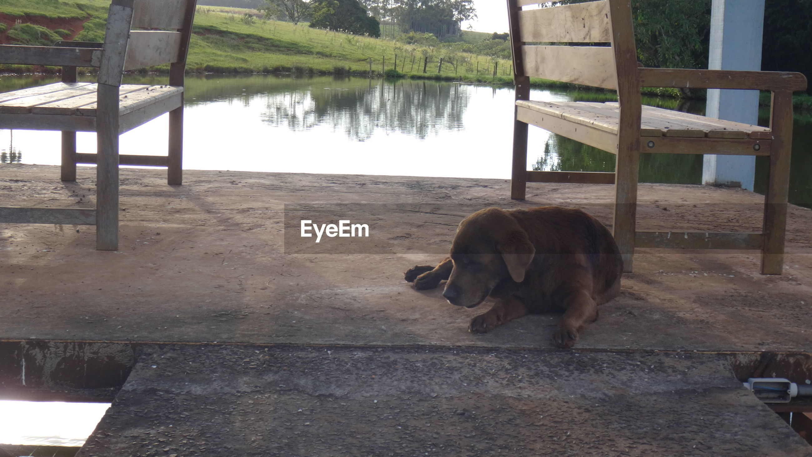 Dog relaxing on pier over river