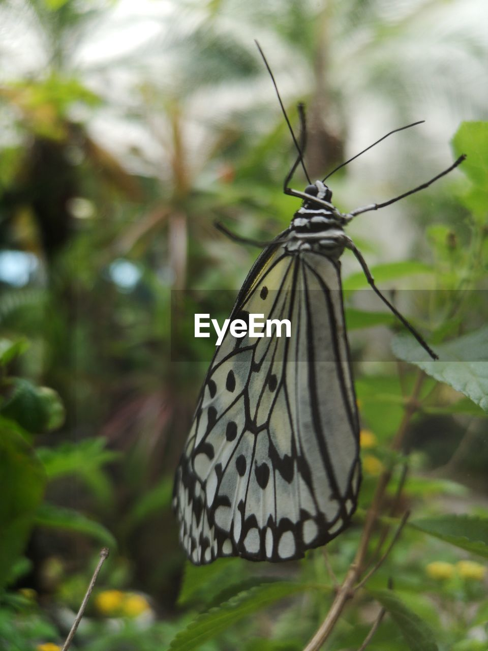 insect, invertebrate, butterfly - insect, animal wing, animal, animals in the wild, animal themes, one animal, animal wildlife, plant, focus on foreground, close-up, beauty in nature, nature, plant part, day, no people, leaf, outdoors, tree, butterfly