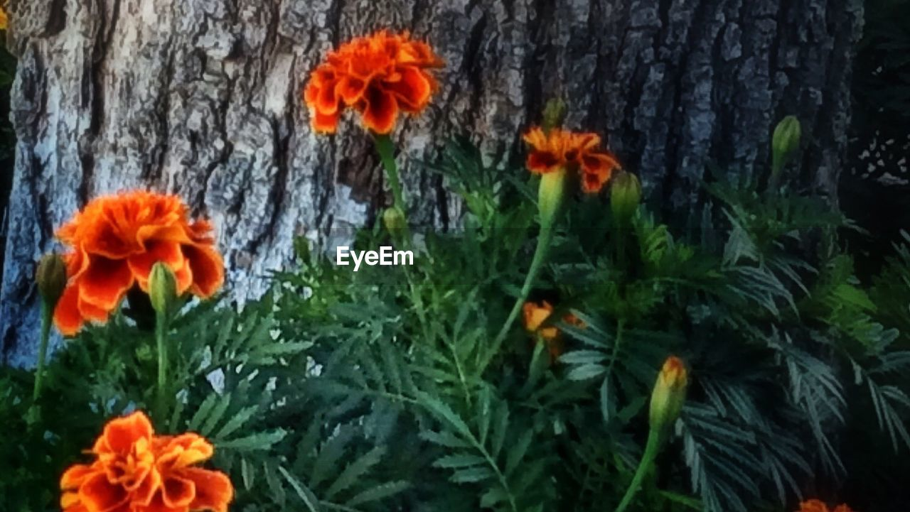flower, orange color, growth, plant, nature, no people, blooming, flower head, outdoors, freshness, beauty in nature, fragility, day, close-up