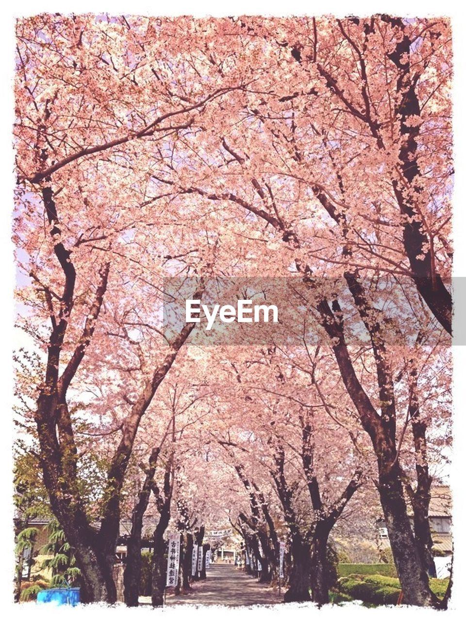 tree, branch, nature, beauty in nature, autumn, tranquility, pink color, no people, growth, change, scenics, day, outdoors, flower, fragility, freshness, sky