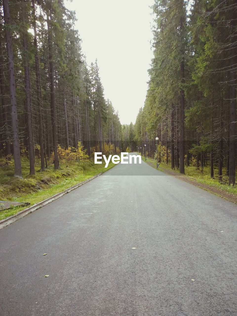 EMPTY ROAD AMIDST TREES IN FOREST