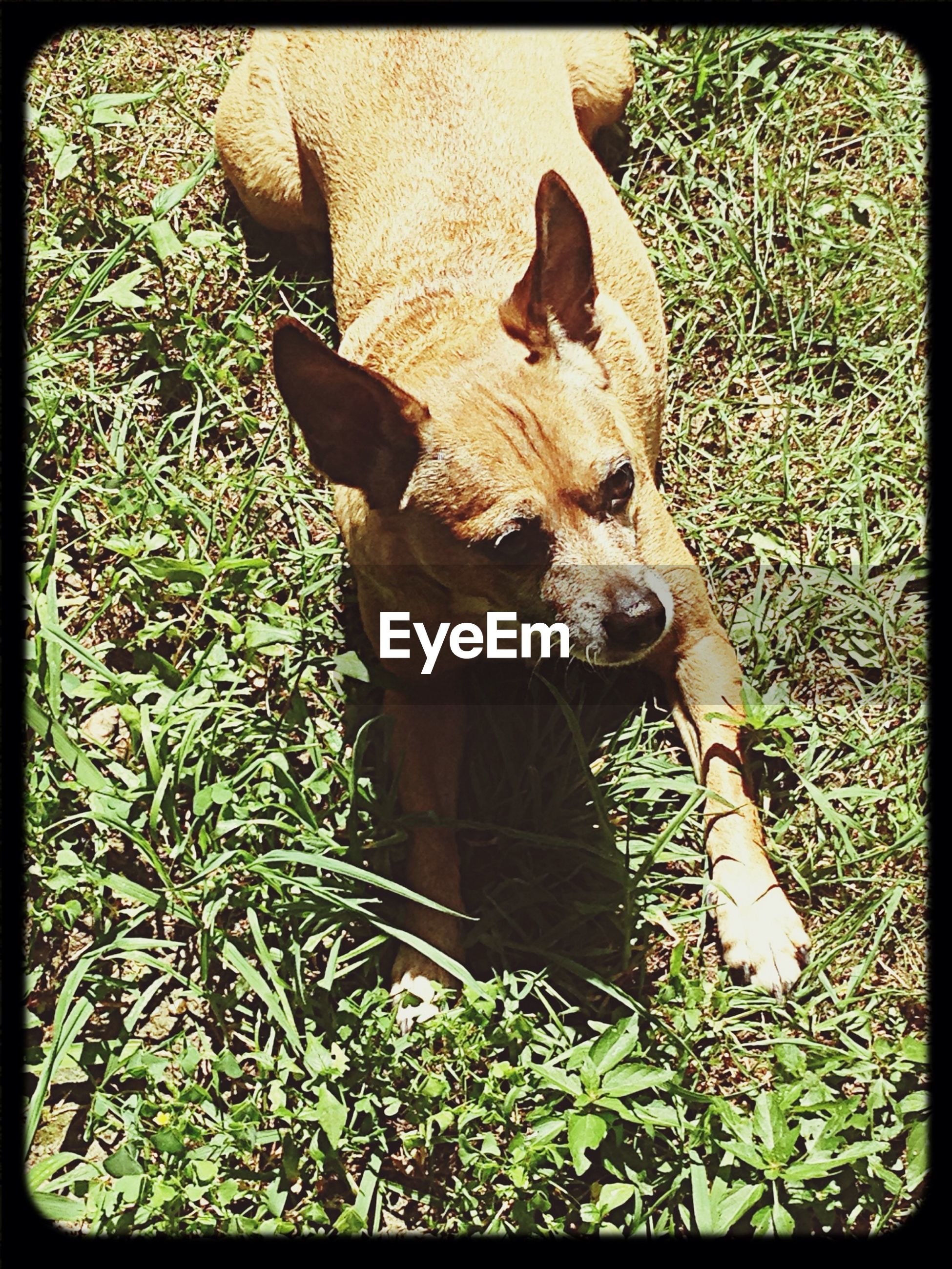 animal themes, transfer print, one animal, mammal, auto post production filter, domestic animals, wildlife, grass, field, animals in the wild, pets, high angle view, plant, nature, relaxation, full length, outdoors, day, zoology, no people