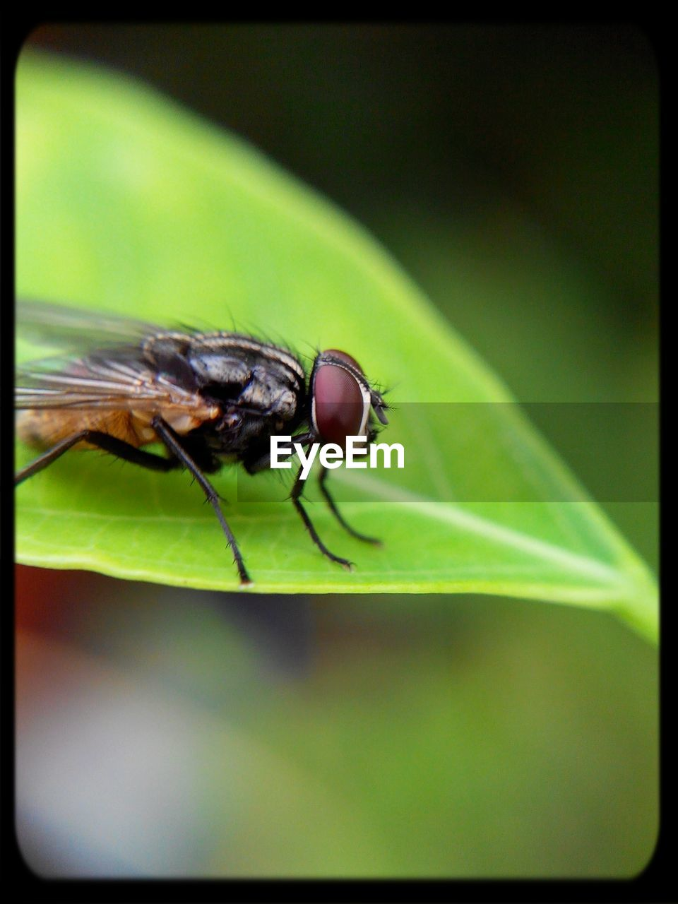 insect, one animal, animal themes, animals in the wild, leaf, green color, close-up, nature, outdoors, day, no people, plant