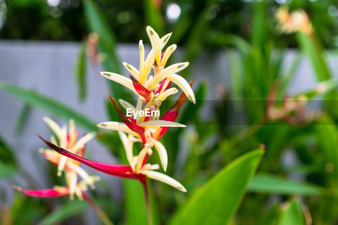 growth, nature, plant, beauty in nature, flower, freshness, no people, green color, outdoors, red, close-up, fragility, day