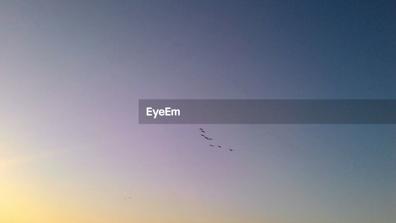 flying, bird, animals in the wild, animal themes, low angle view, mid-air, flock of birds, beauty in nature, nature, sunset, no people, animal wildlife, migrating, outdoors, one animal, clear sky, sky, bird of prey, day