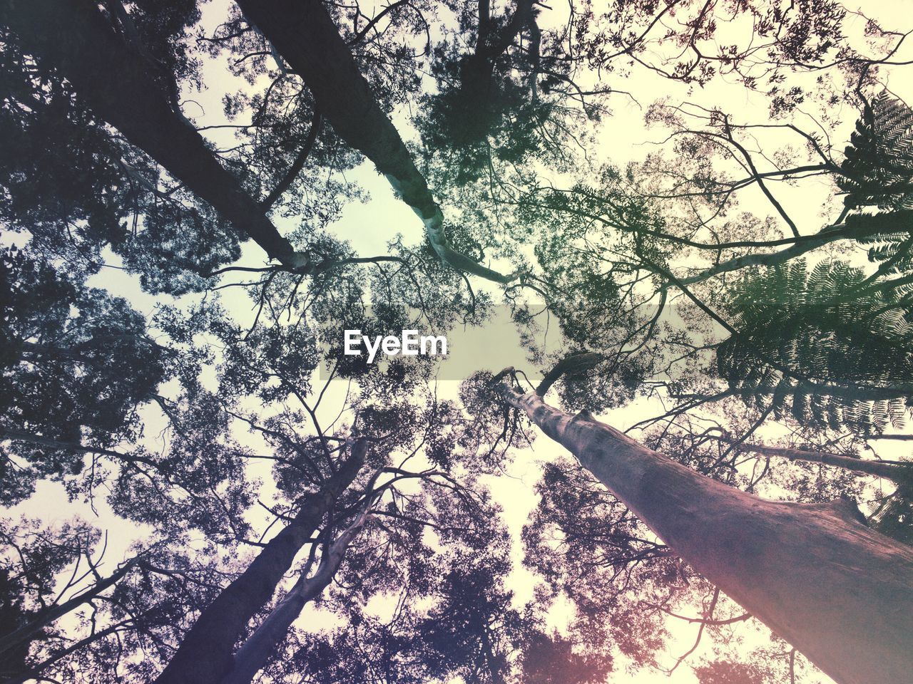 tree, nature, tree trunk, forest, branch, growth, beauty in nature, low angle view, tranquility, day, outdoors, no people, scenics, sky