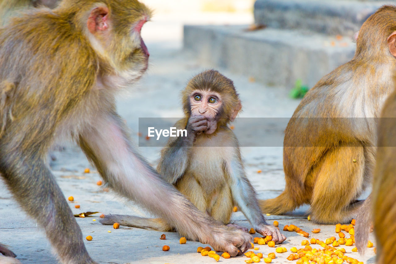 primate, mammal, group of animals, animal wildlife, vertebrate, animals in the wild, focus on foreground, no people, young animal, animal family, sitting, two animals, looking away, day, looking, togetherness, care