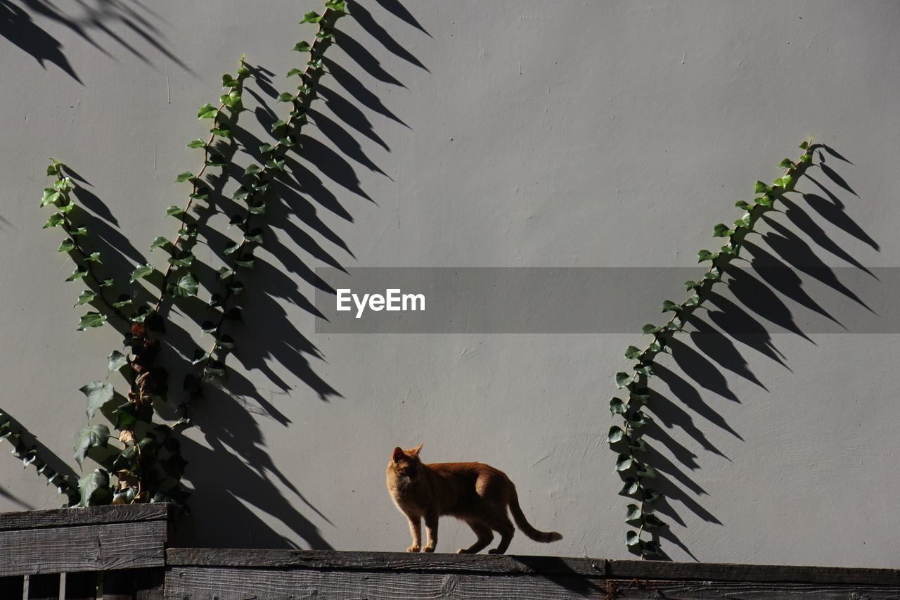 Side View Of Cat Standing On Wood Against Wall