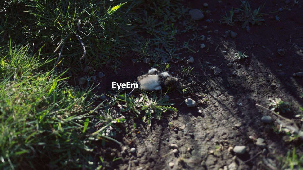 Dead young bird lying on dirt