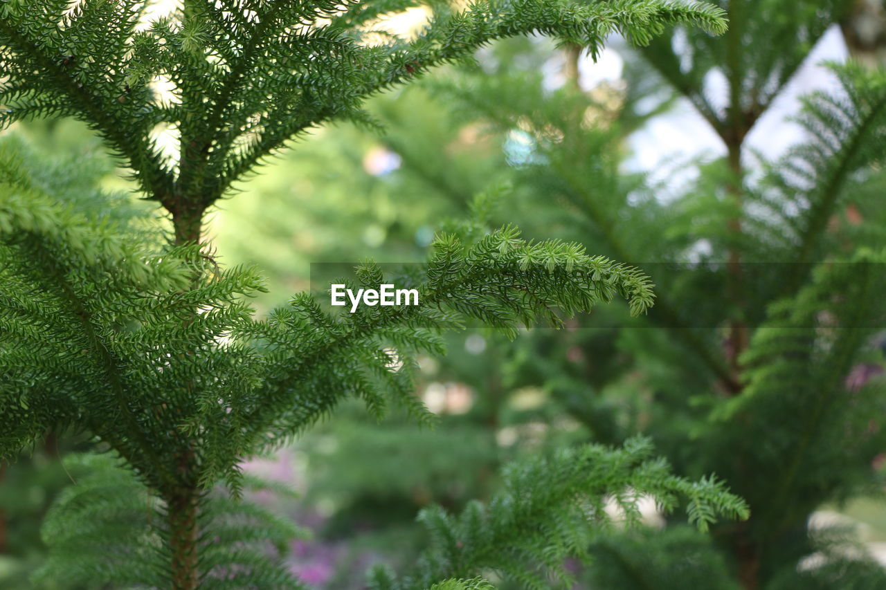 green color, growth, tree, nature, day, close-up, selective focus, plant, focus on foreground, no people, beauty in nature, outdoors, freshness
