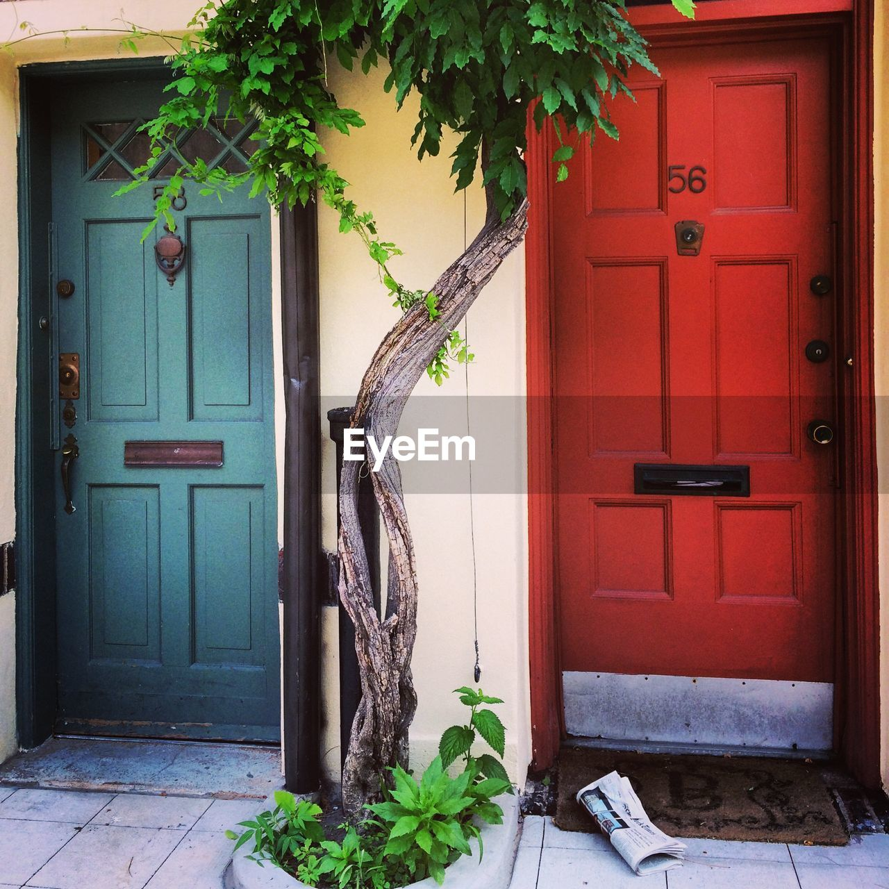 door, plant, potted plant, leaf, entrance, closed, house, growth, architecture, day, built structure, doorway, green color, no people, building exterior, wood - material, window, outdoors, ivy, open door, entry, nature, tree