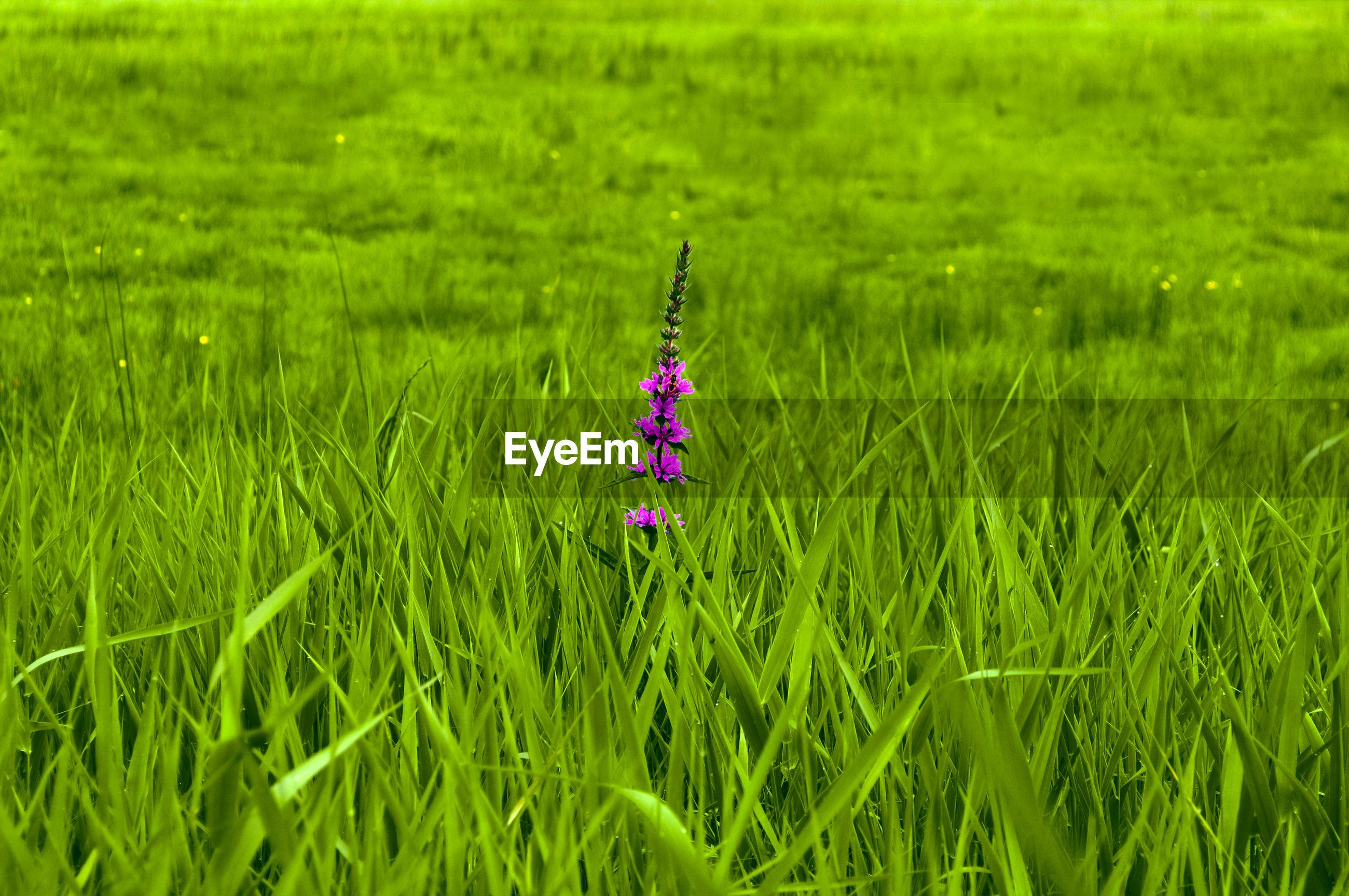 UMBRELLA ON GRASS FIELD