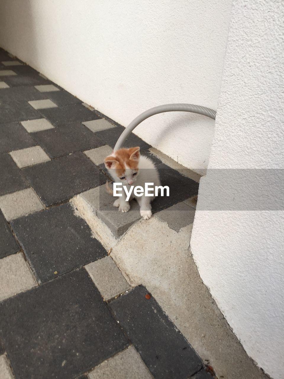 High angle view kitten on floor
