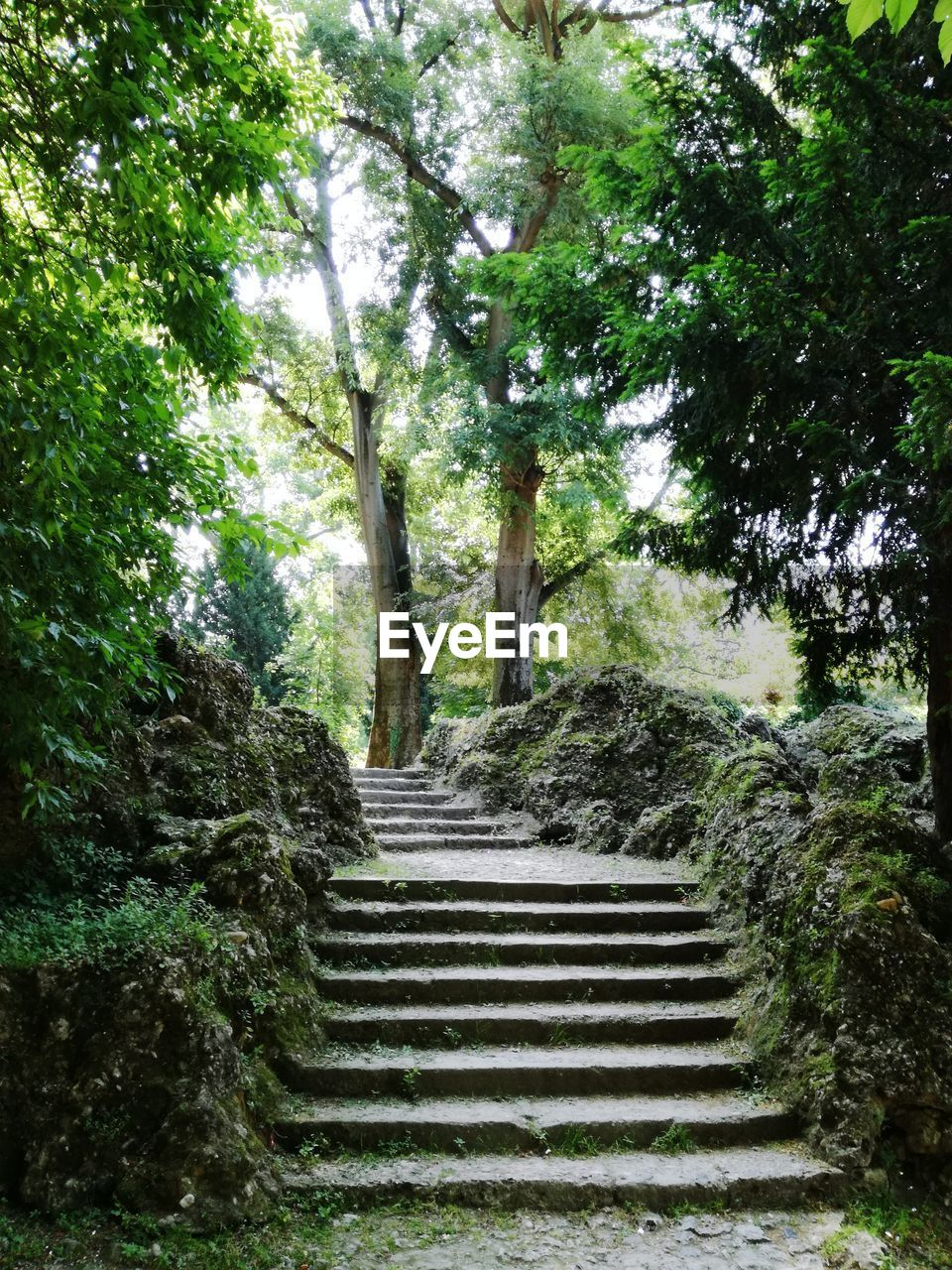 steps, steps and staircases, staircase, tree, the way forward, day, tranquil scene, nature, green color, outdoors, growth, no people, beauty in nature