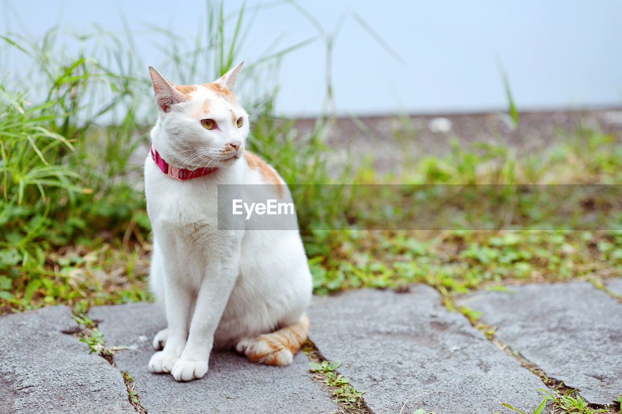 one animal, mammal, animal themes, domestic, pets, animal, domestic animals, vertebrate, dog, looking away, sitting, canine, looking, focus on foreground, no people, grass, day, plant, nature, white color, mouth open, whisker