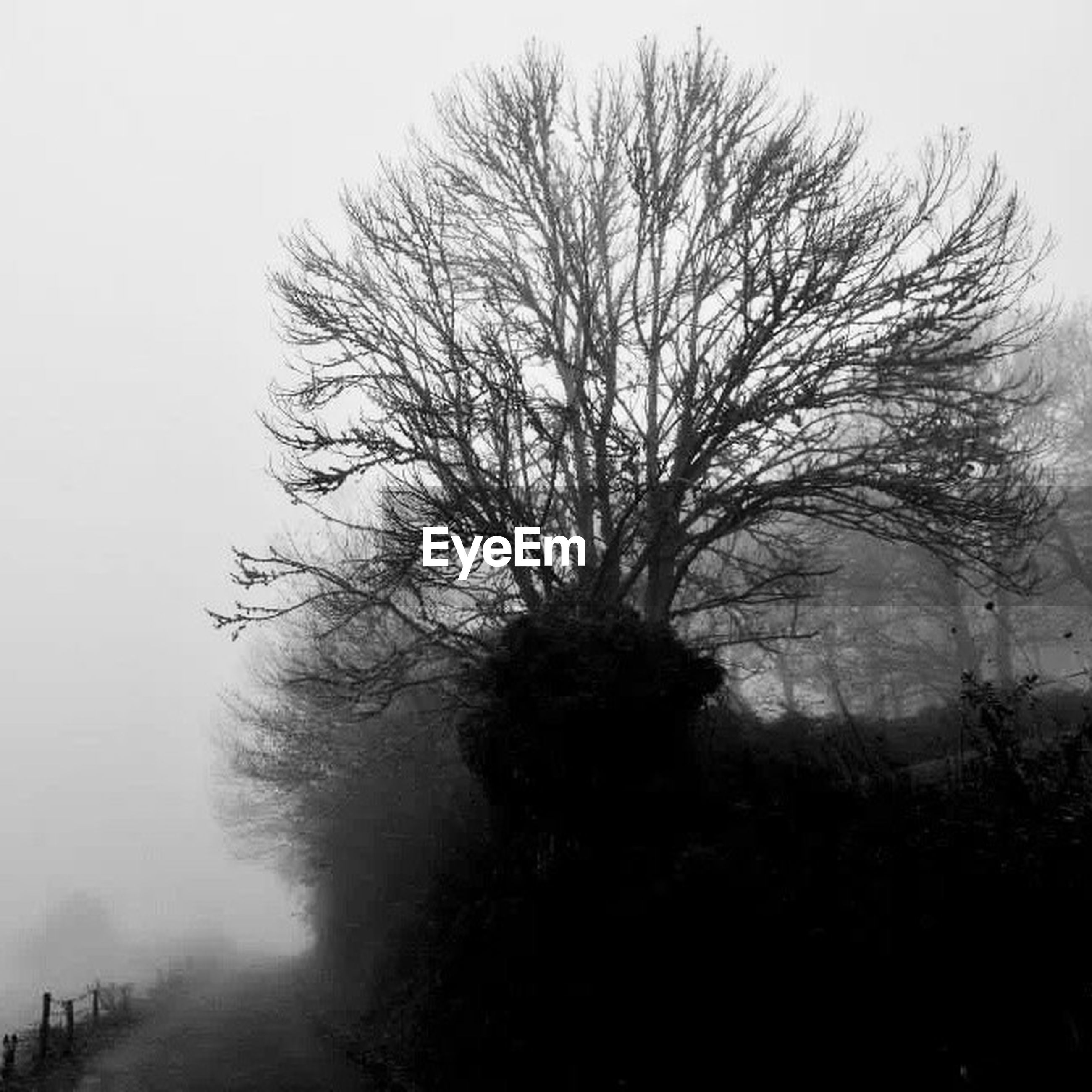 tree, bare tree, fog, foggy, tranquility, branch, nature, silhouette, tranquil scene, weather, growth, beauty in nature, tree trunk, scenics, field, outdoors, sky, landscape, day