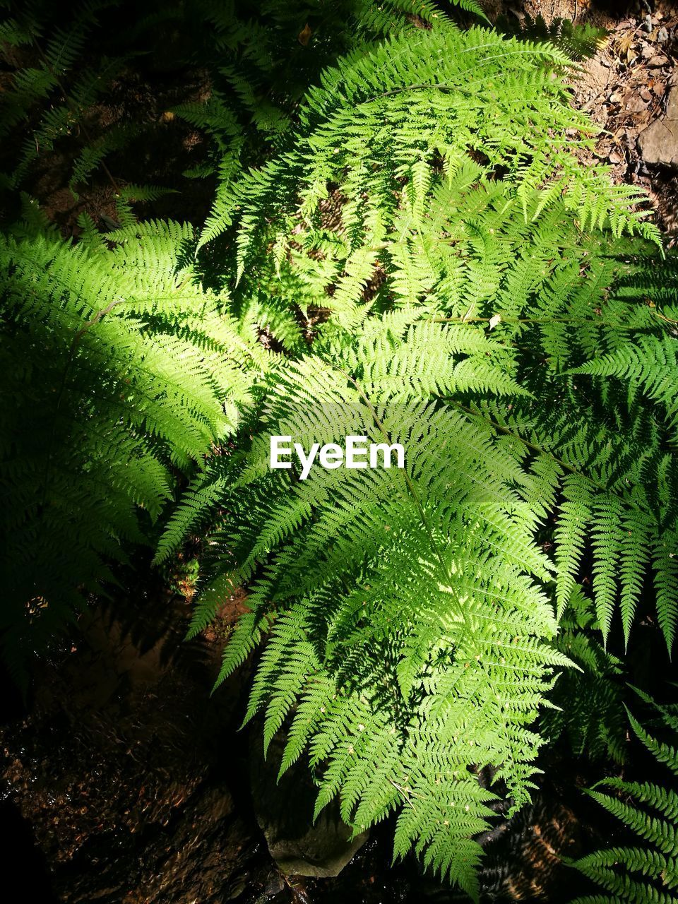 plant, growth, green color, beauty in nature, nature, leaf, fern, plant part, no people, day, tree, close-up, tranquility, high angle view, green, outdoors, land, forest, foliage, sunlight, leaves