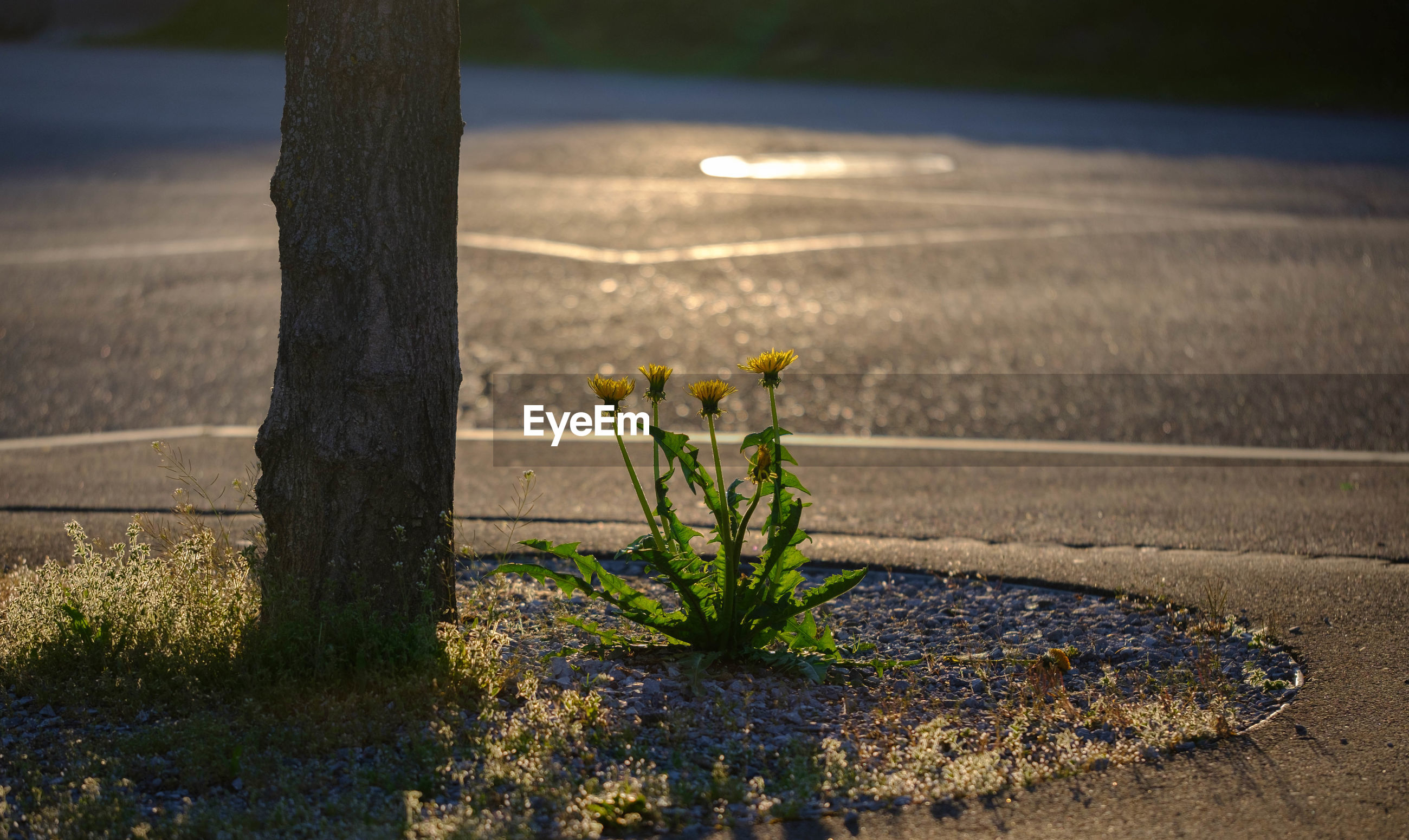 Close-up of plant on road by street