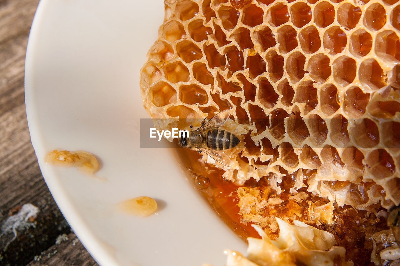 food and drink, food, honeycomb, close-up, freshness, still life, no people, sweet food, high angle view, indoors, ready-to-eat, wellbeing, baked, honey, table, bread, serving size, healthy eating, plate, brown, breakfast, temptation