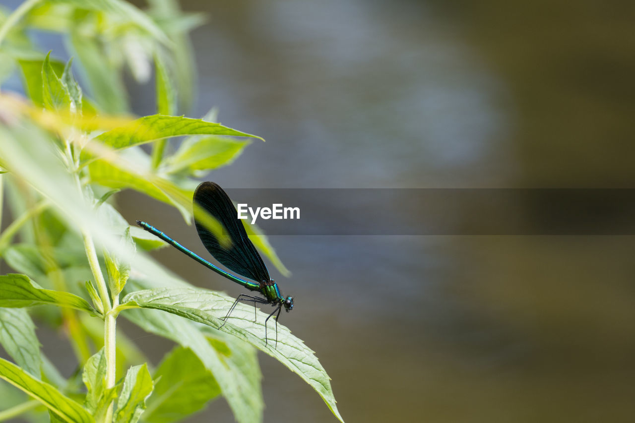 green color, plant part, plant, one animal, leaf, animal themes, animal, animals in the wild, animal wildlife, invertebrate, insect, close-up, growth, day, focus on foreground, no people, beauty in nature, nature, outdoors, selective focus