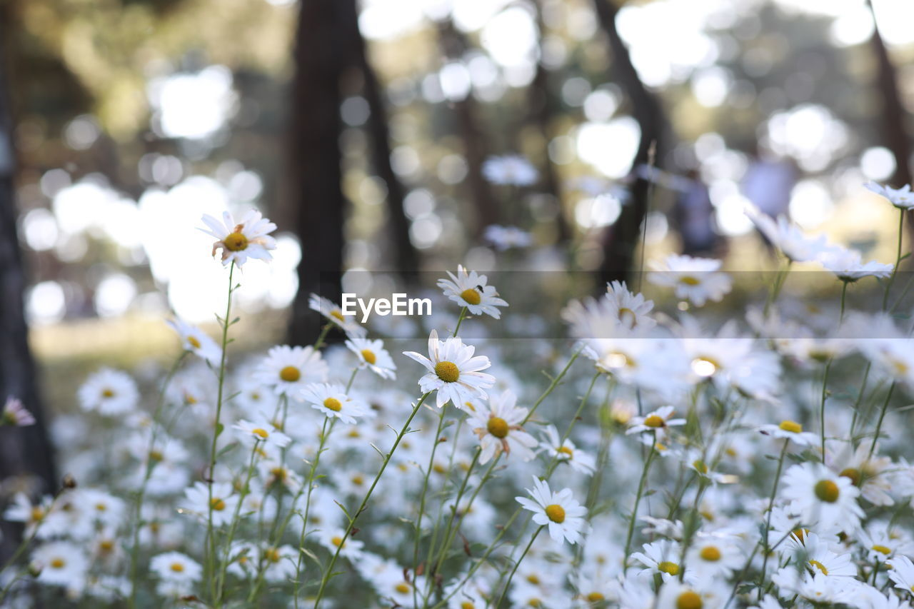 flowering plant, flower, plant, freshness, fragility, beauty in nature, growth, vulnerability, land, white color, petal, nature, close-up, selective focus, flower head, day, no people, animal themes, inflorescence, animal wildlife, outdoors, springtime