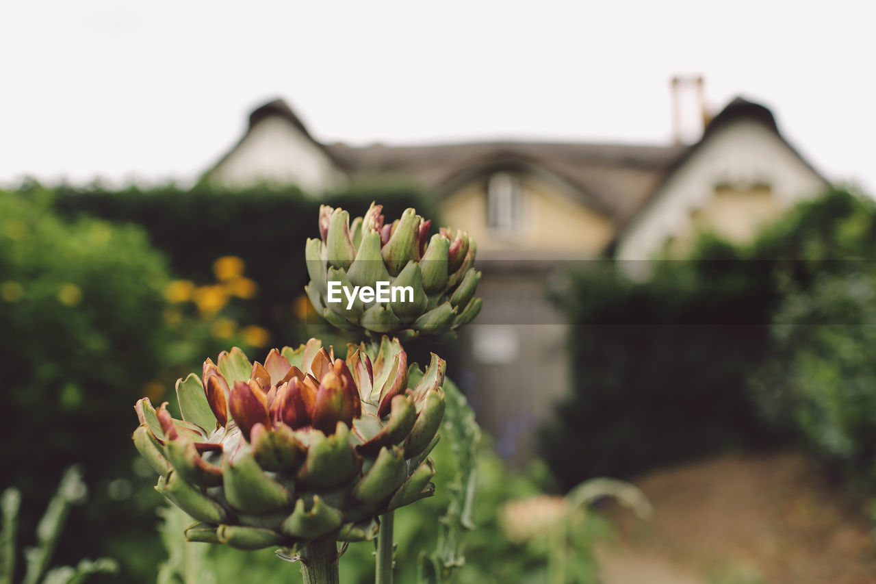 focus on foreground, no people, growth, freshness, flower, plant, green color, nature, day, outdoors, beauty in nature, close-up, fragility, flower head