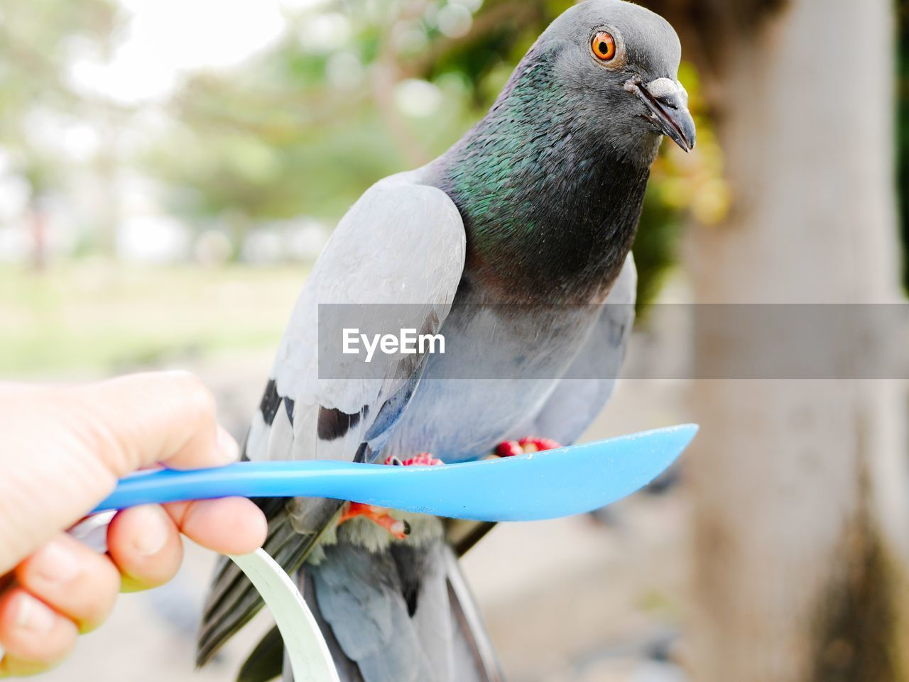 bird, vertebrate, focus on foreground, animal wildlife, animals in the wild, human hand, one animal, one person, day, hand, holding, human body part, close-up, perching, real people, unrecognizable person, outdoors, finger