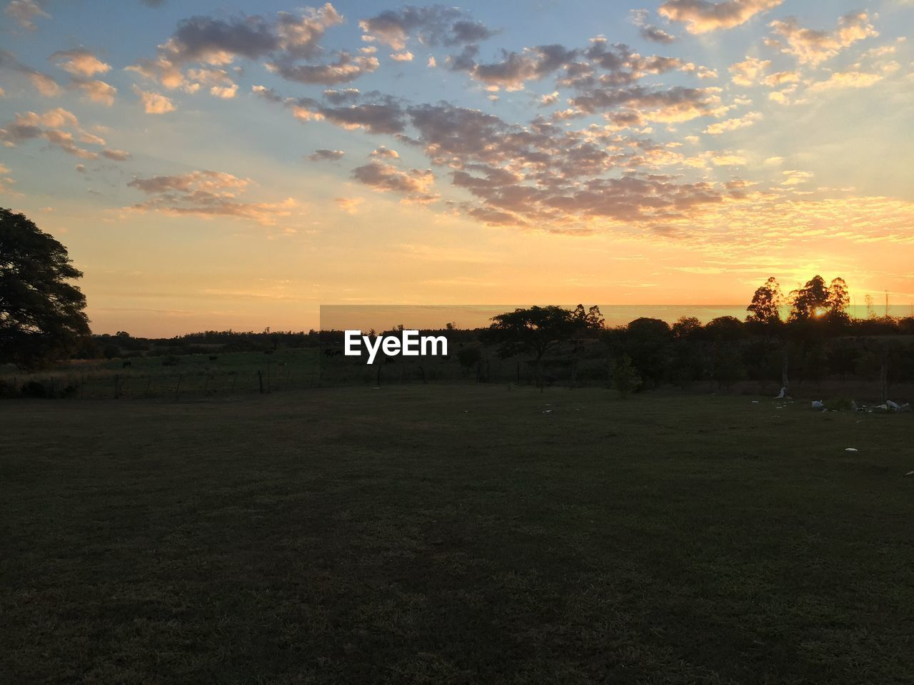 tree, sunset, nature, field, sky, beauty in nature, landscape, tranquility, tranquil scene, scenics, orange color, grass, no people, outdoors, growth, cloud - sky, golf course, sport, golf, day