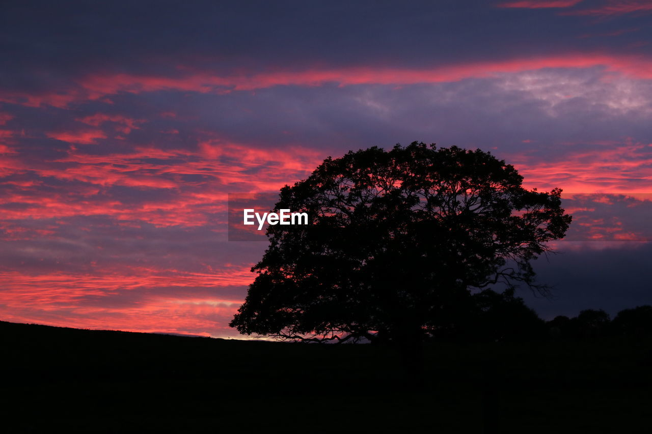 sunset, nature, beauty in nature, tree, tranquility, sky, scenics, silhouette, tranquil scene, no people, outdoors, cloud - sky, landscape, night