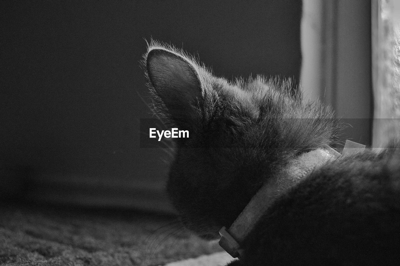 one animal, animal themes, domestic cat, domestic animals, pets, indoors, mammal, cat, feline, close-up, no people, home interior, day