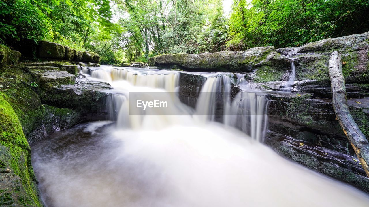 waterfall, flowing water, motion, water, long exposure, forest, nature, beauty in nature, river, tree, environment, blurred motion, scenics, no people, day, outdoors