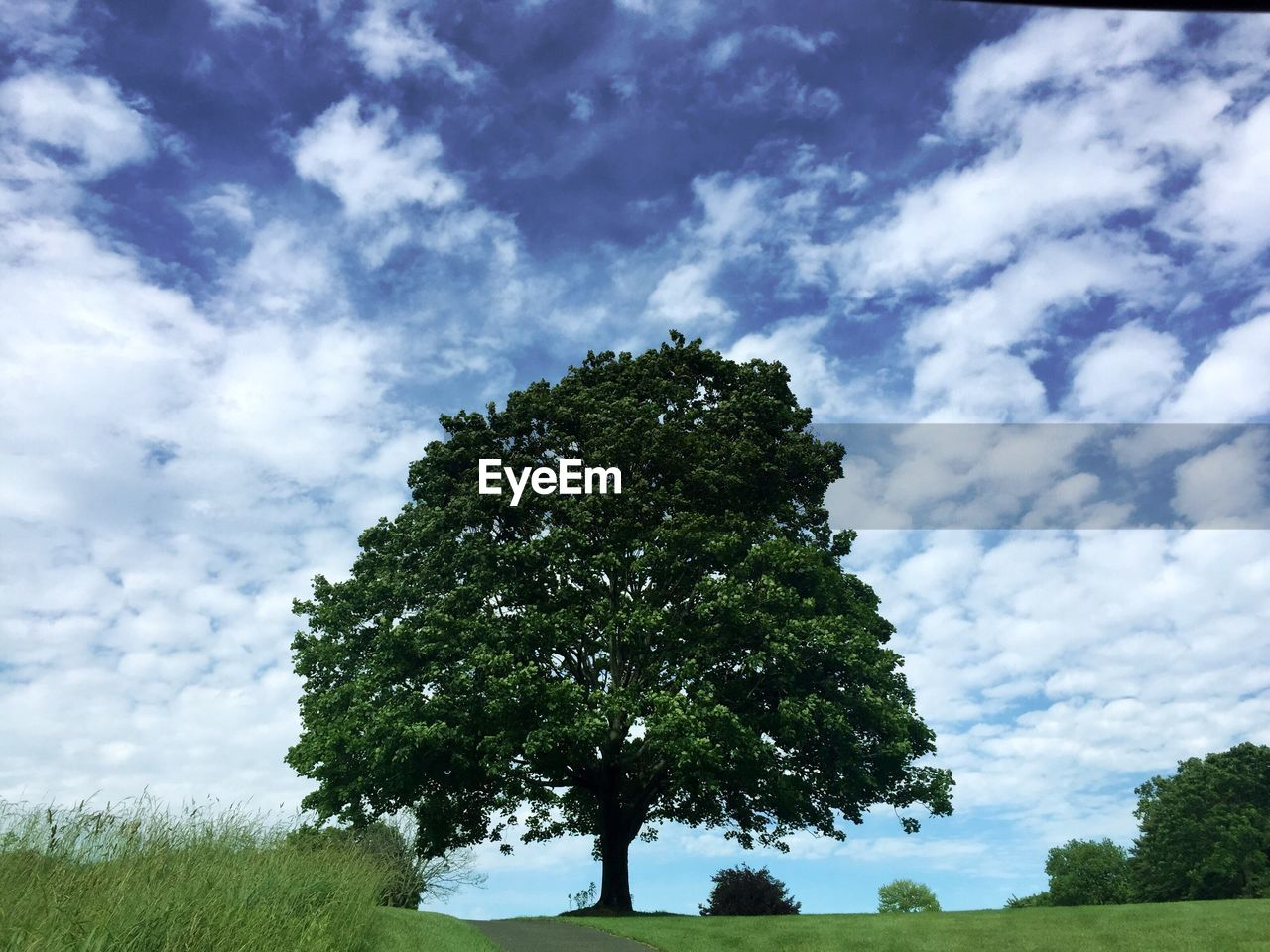 tree, sky, nature, cloud - sky, growth, beauty in nature, tranquility, day, low angle view, scenics, green color, no people, tranquil scene, outdoors, landscape, grass