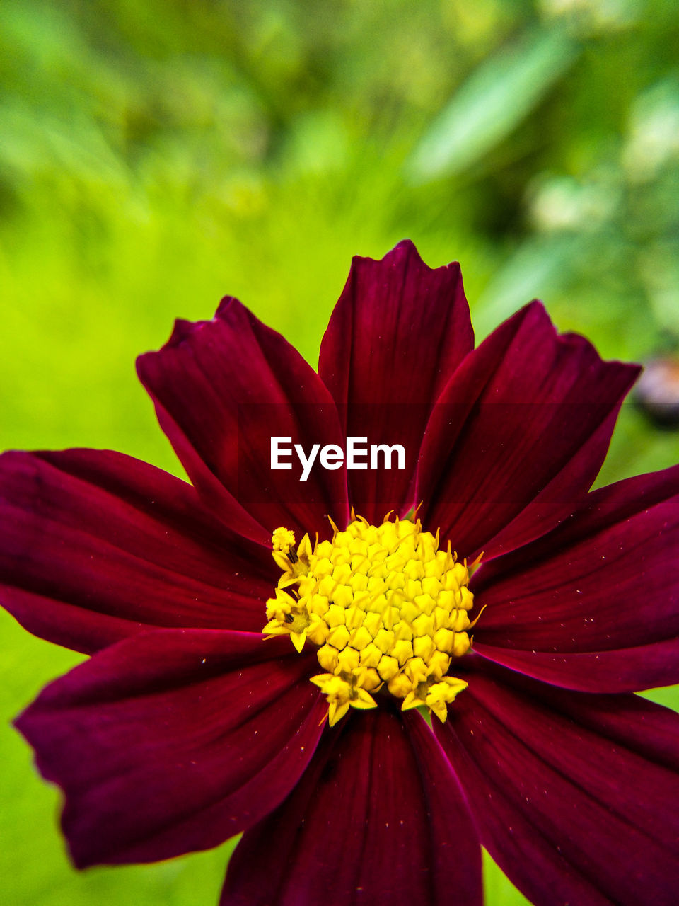 flower, petal, fragility, nature, beauty in nature, yellow, flower head, red, freshness, growth, no people, close-up, outdoors, blooming, plant, day