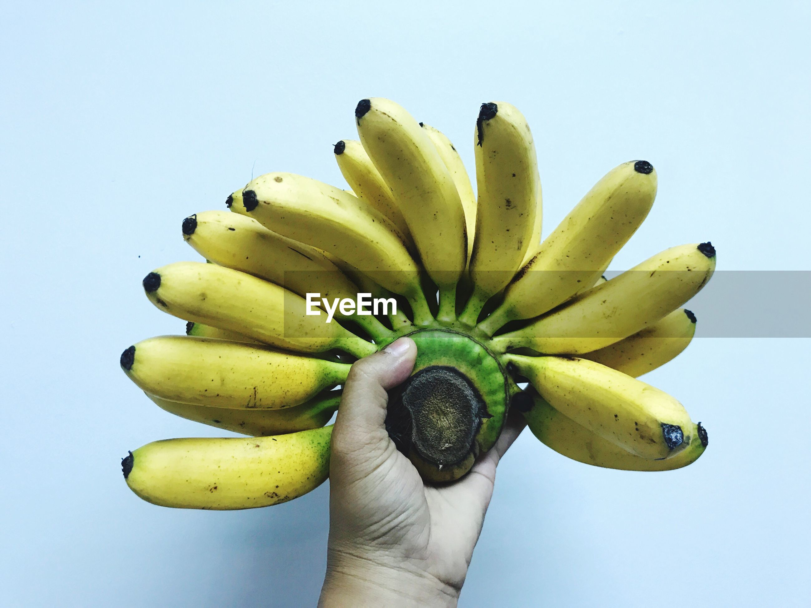 Cropped hand holding bananas against white background