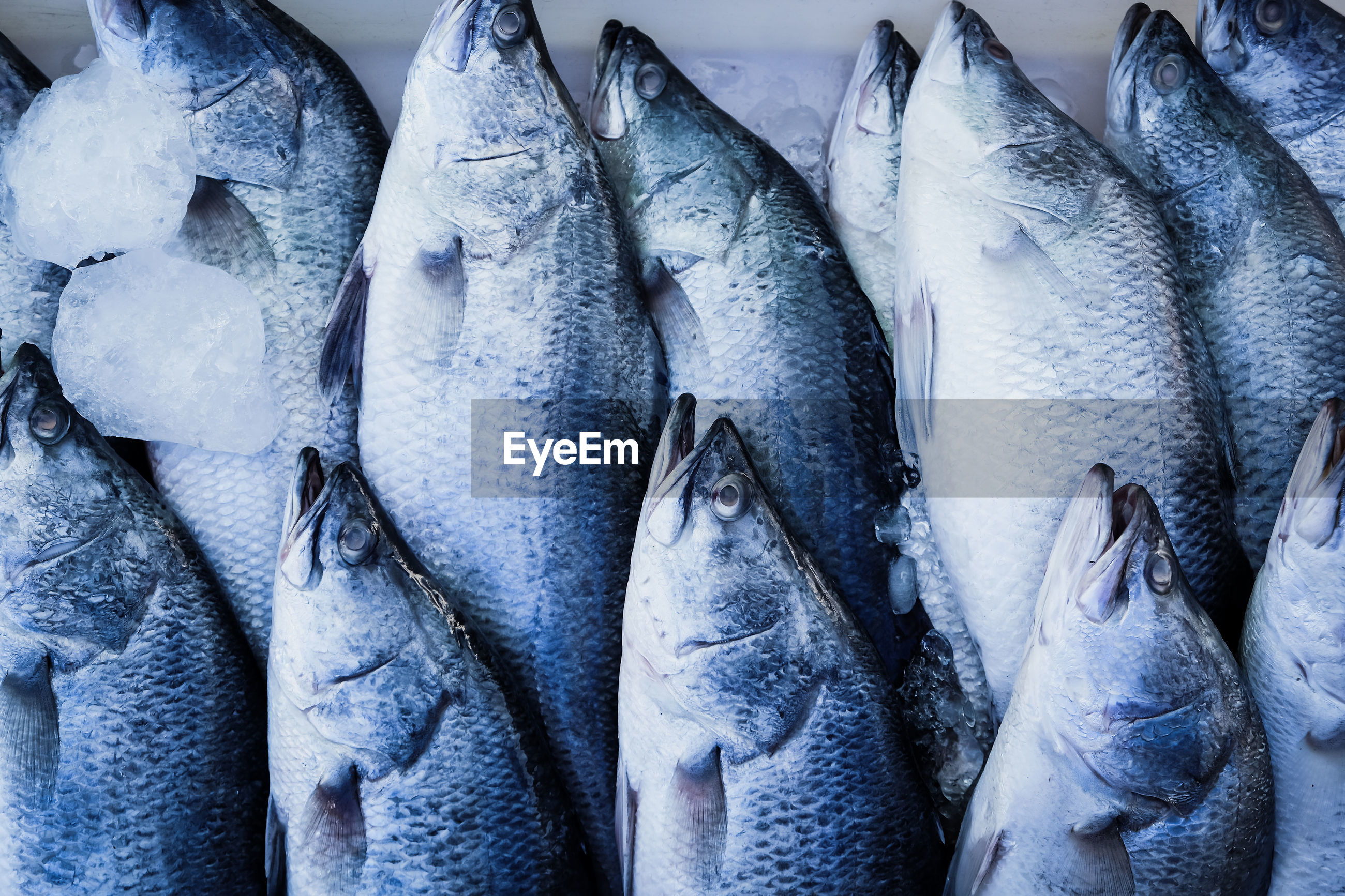 FISH FOR SALE IN MARKET