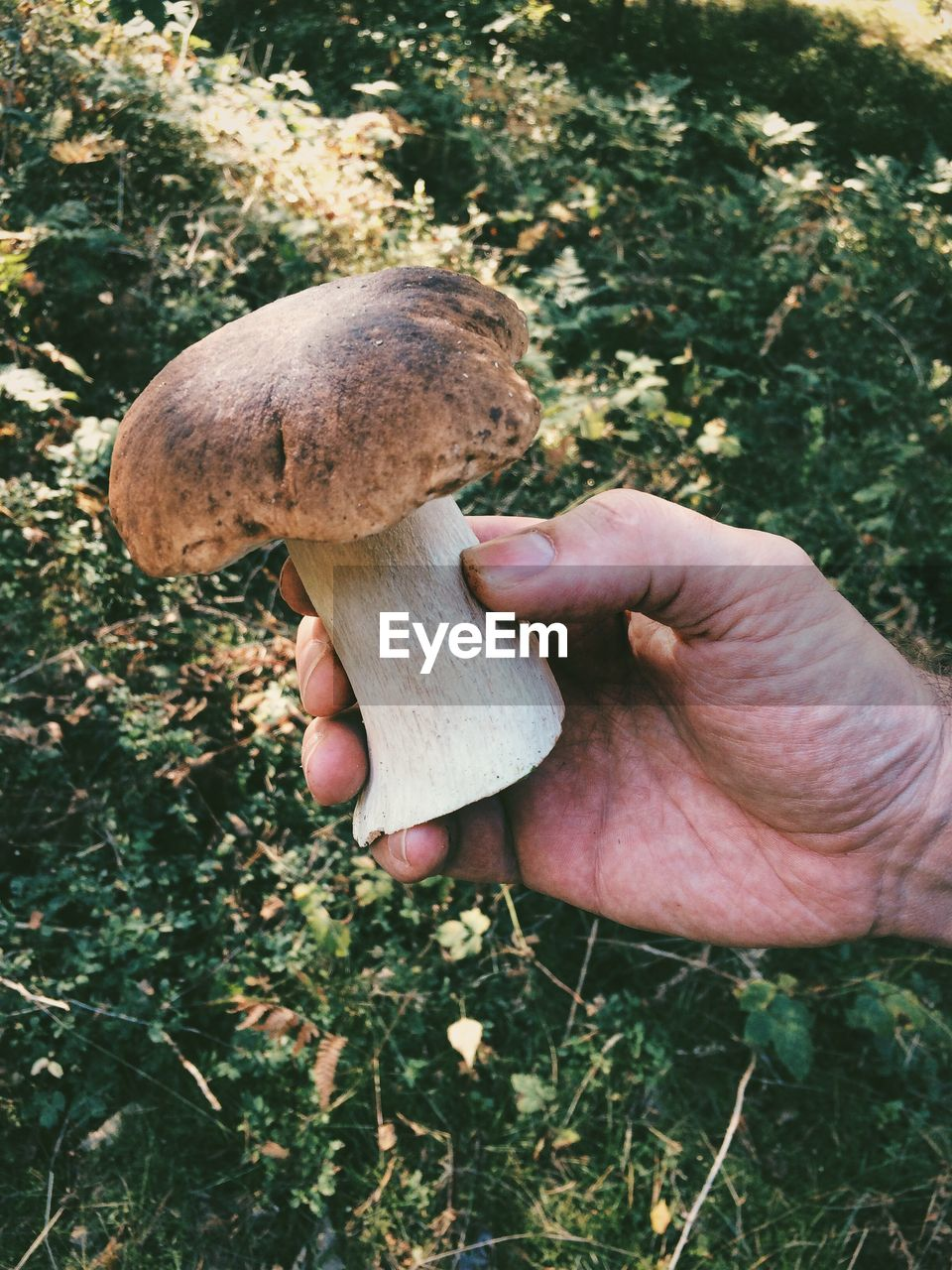 Cropped Image Of Person Holding Mushroom Against Plants