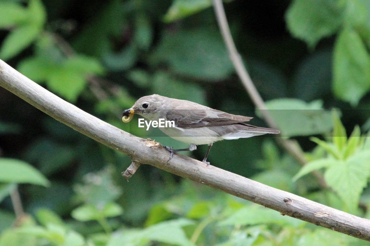 Close-Up Side View Of Bird On Branch Against Blurred Background