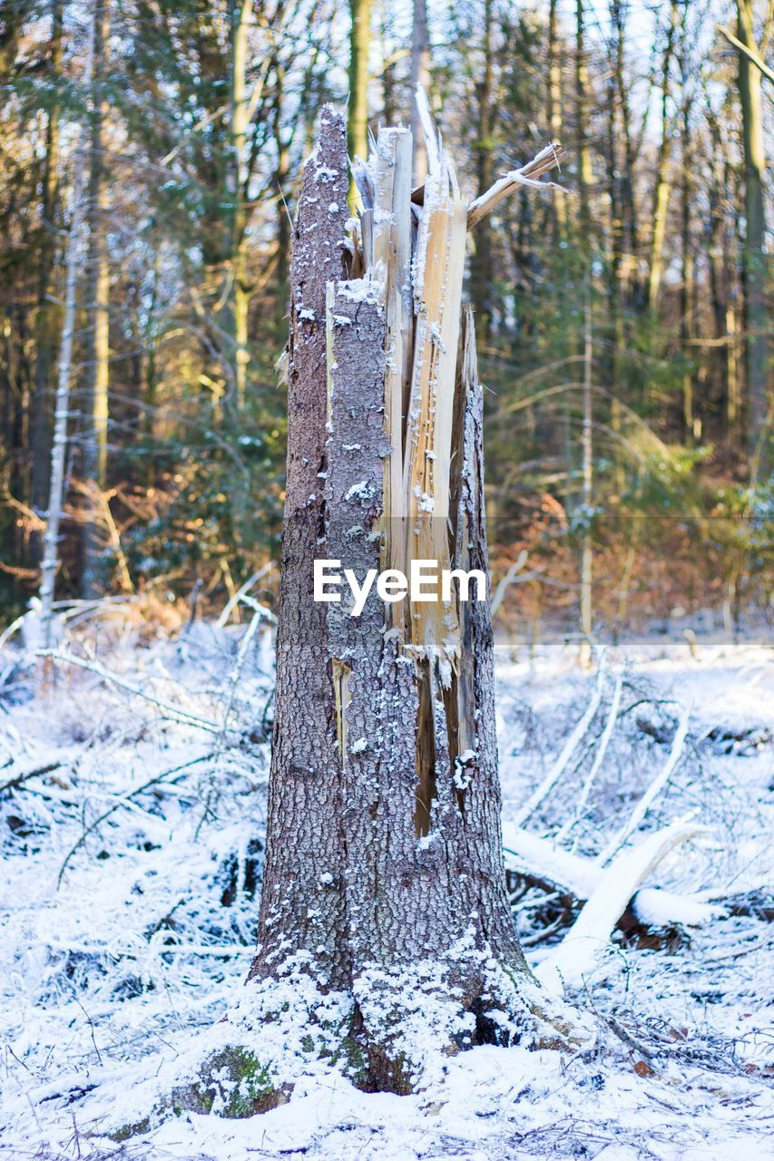 tree, land, plant, winter, forest, snow, cold temperature, nature, trunk, tranquility, tree trunk, focus on foreground, no people, day, beauty in nature, field, growth, wood - material, non-urban scene, woodland, outdoors, wooden post