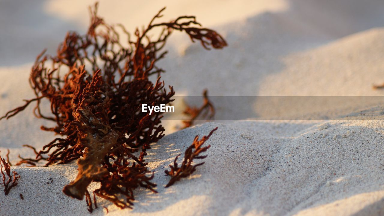 nature, beach, land, sand, no people, day, selective focus, focus on foreground, close-up, outdoors, seaweed, sea, sunlight, tranquility, beauty in nature, water, plant, sky, solid