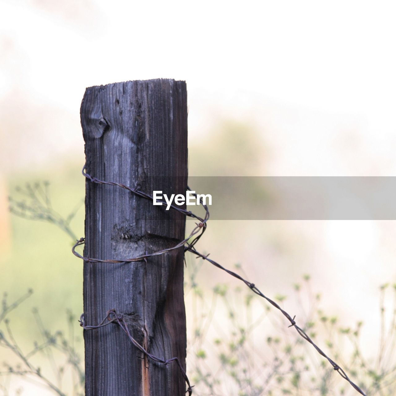 Bared Wire On Wooden Post