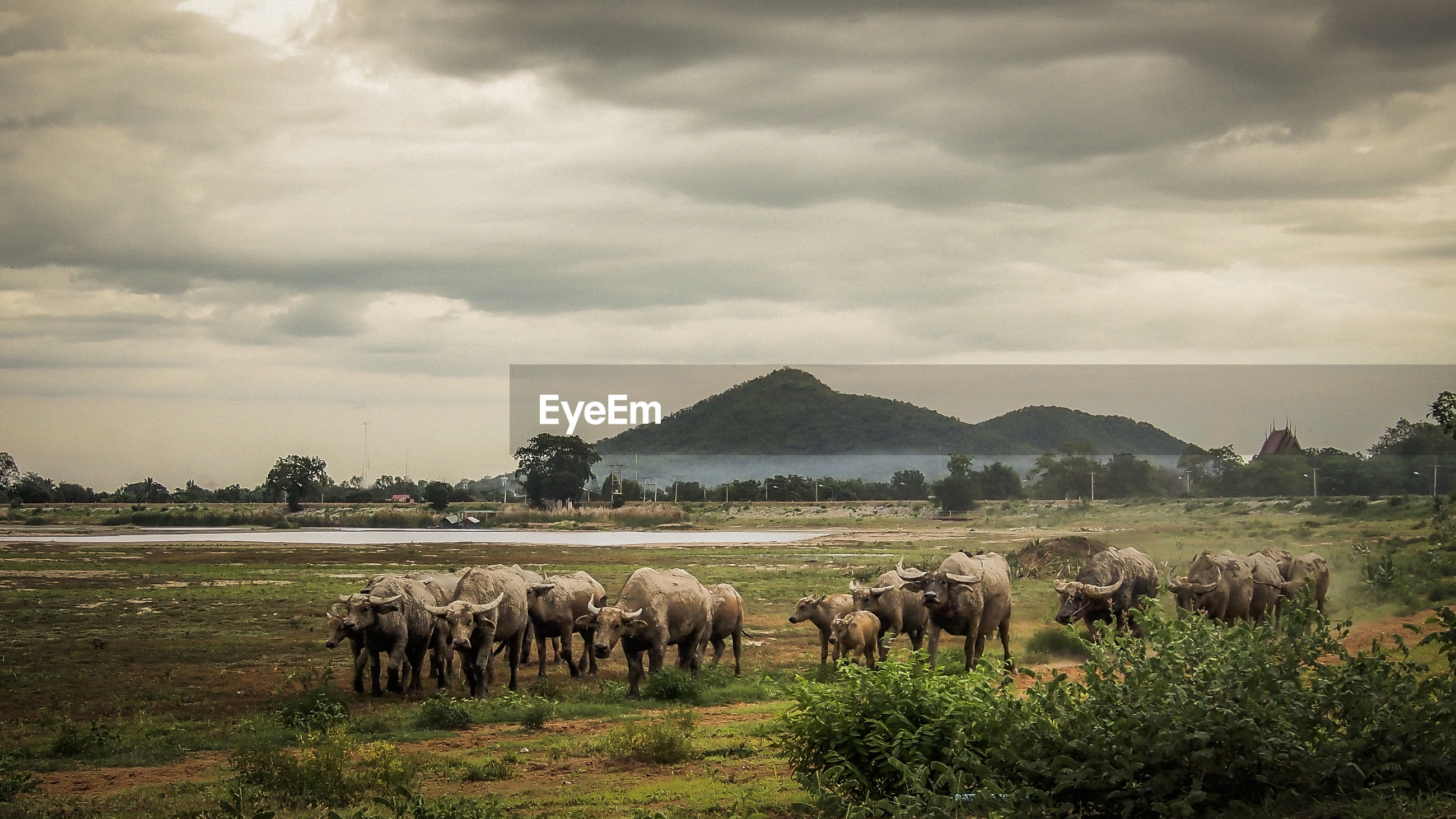 sky, landscape, field, grass, cloud - sky, grazing, tranquil scene, tranquility, nature, livestock, scenics, mammal, beauty in nature, mountain, cloudy, rural scene, cloud, day, non-urban scene, outdoors, no people, growth, herbivorous, remote, grassy, horizon over land, green color, idyllic, mountain range