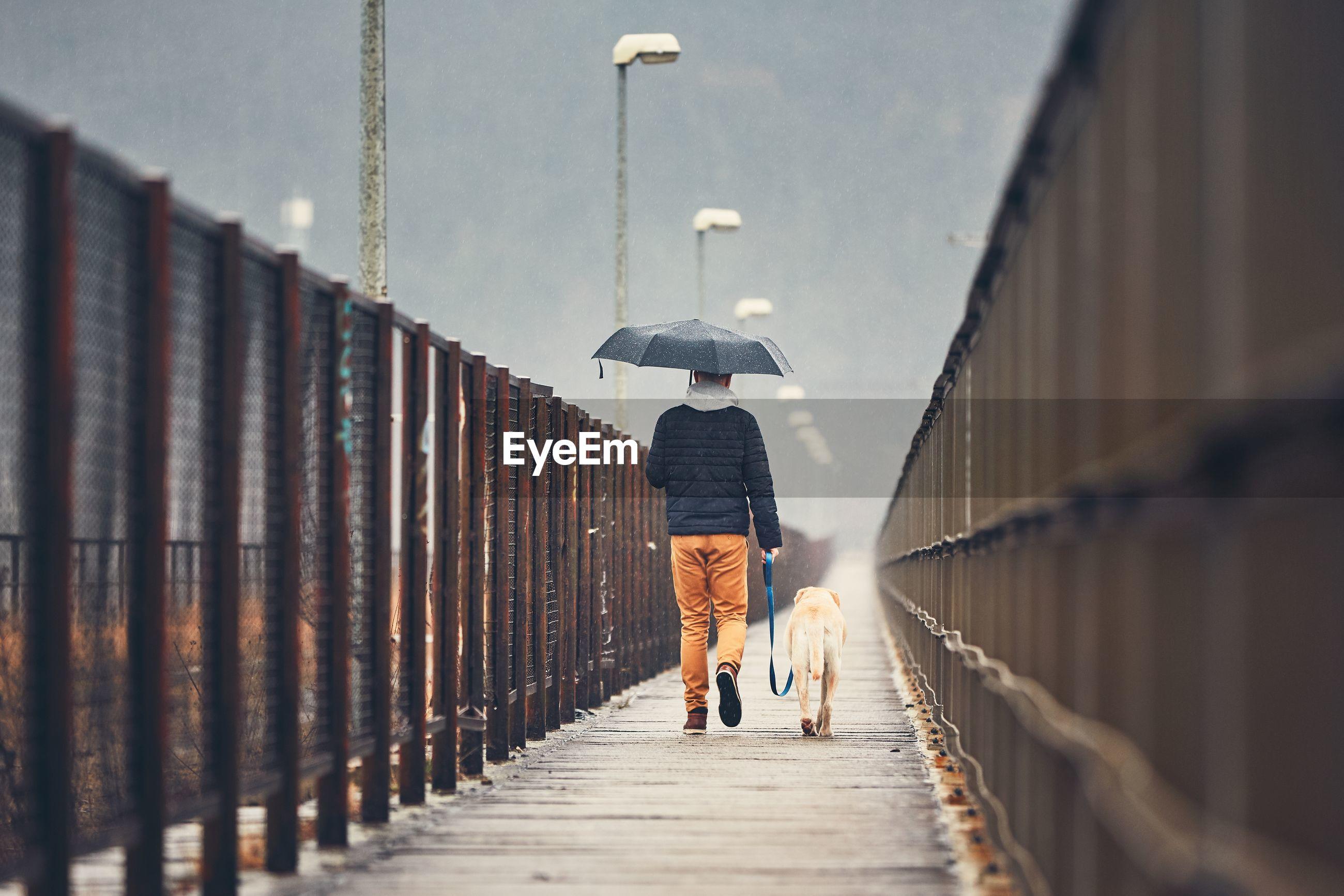 Rear view of man walking with dog on footbridge during rainy season
