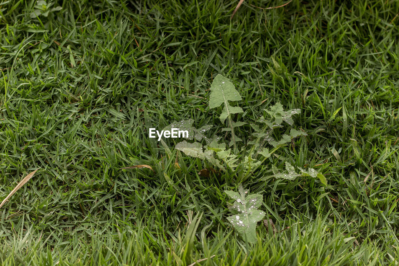 grass, green color, full frame, backgrounds, field, nature, high angle view, outdoors, growth, no people, day, beauty in nature, close-up, freshness